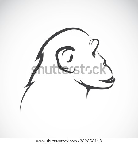 Vector image of a chimpanzee on white background - stock vector
