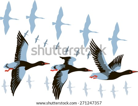 vector image of a flying flock of wild geese - stock vector