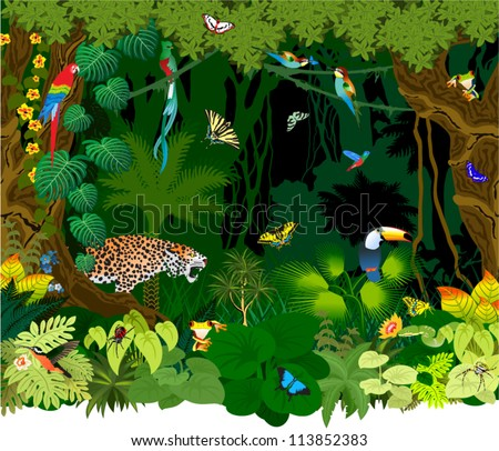 Jungle Stock Photos Images amp Pictures Shutterstock