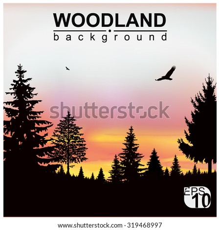 Vector landscape. Silhouette of coniferous trees on the background of colorful sky. Sunset. Flying eagles. Eps 10. - stock vector