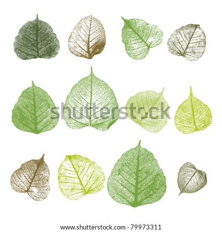 Vector leafs, isolated - stock vector