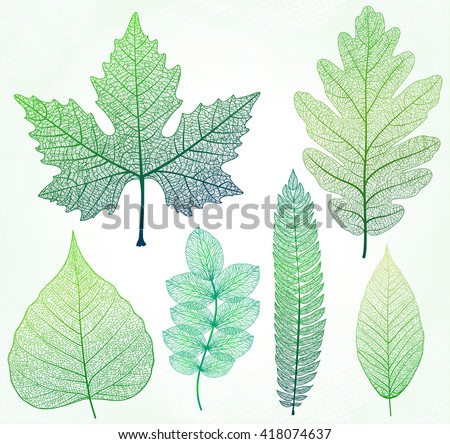 Vector leaves isolated and green. - stock vector