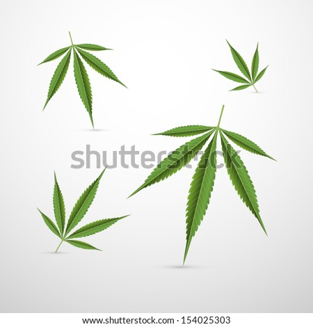 Vector Medical Cannabis Leaves Isolated on Grey Background  - stock vector