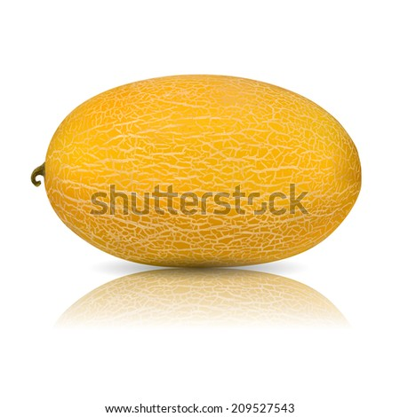 Vector melon - isolated  on white background - stock vector
