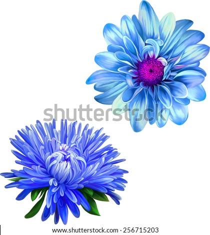 Vector Mona Lisa flower, Blue flower, Purple Thistle flower, aster flower, Spring flower.Isolated on white background. - stock vector