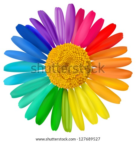 Vector multicolored daisy, chamomile flower isolated - stock vector