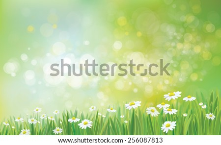 Vector nature background with grass and chamomiles. - stock vector