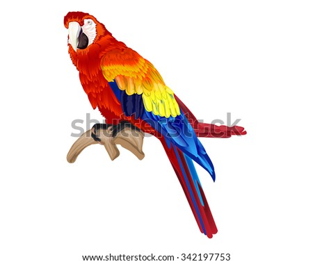 Vector of macaw bird isolated on white - stock vector