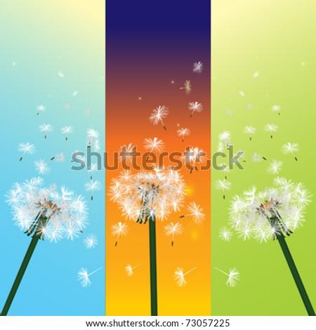 vector of three dandelion in the wind - stock vector