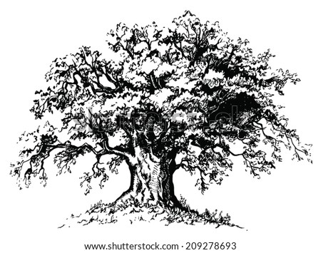 Vector old tree. Isolated black silhouette on white background - stock vector