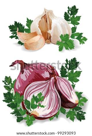 Vector Onion and Garlic - stock vector