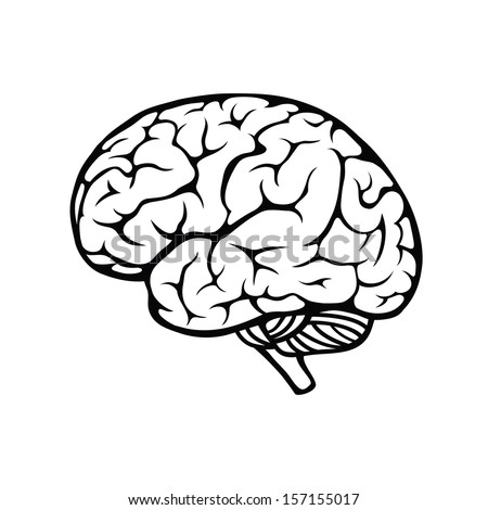 Vector outline illustration of human brain on white background - stock vector