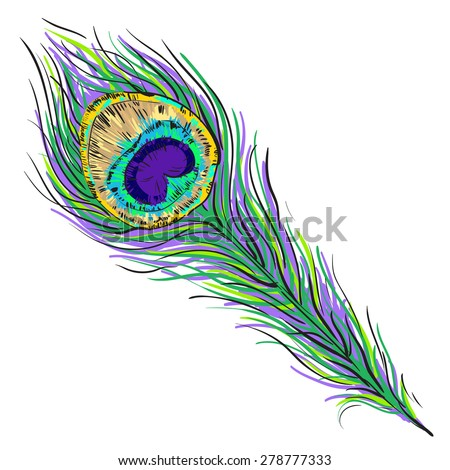 Vector peacock feather illustration isolated on white - stock vector