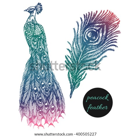 Vector peacock, feather set on white background, hand drawn vector illustration. Design for fashion, t-shirt, invitation, wedding card - stock vector