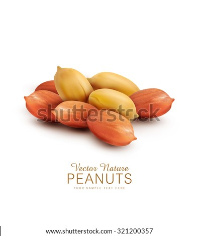 Vector peanut kernels isolated on a white background (design element) - stock vector