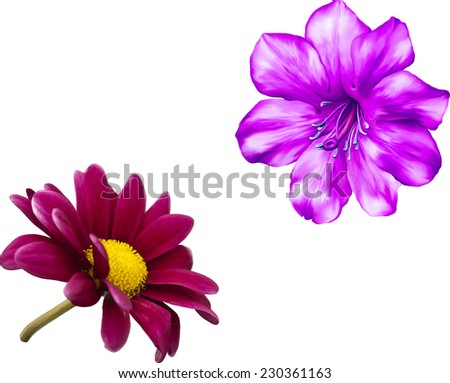 Vector Pink flower, Spring flower.Isolated on white background. - stock vector