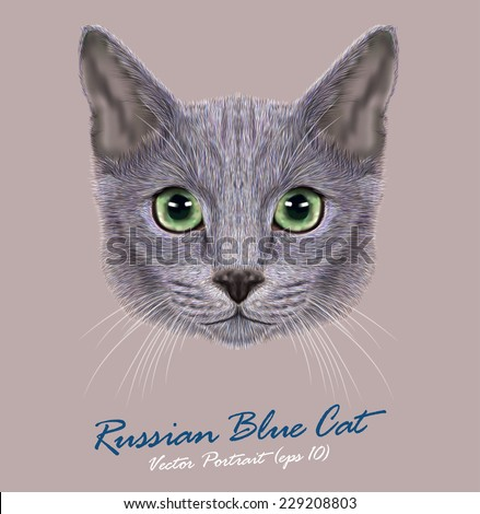 Vector Portrait of Domestic Cat. Russian Blue Cat. Cute young cat with green eyes. - stock vector