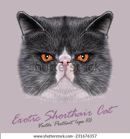 Vector Portrait of Exotic Shorthair Cat. Cute bi-color Persian Cat with orange eyes. - stock vector