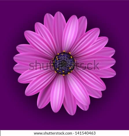 vector realistic purple flower - stock vector