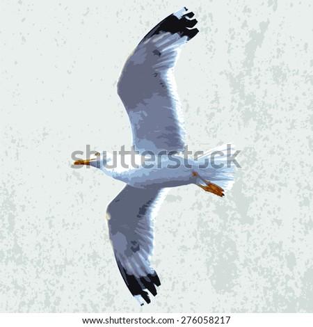 vector realistic seagull - stock vector