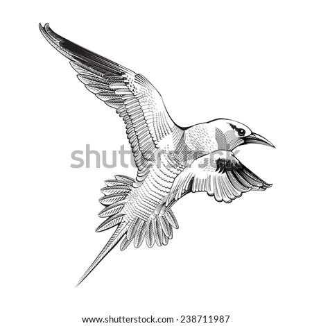 Vector seagull  - stock vector