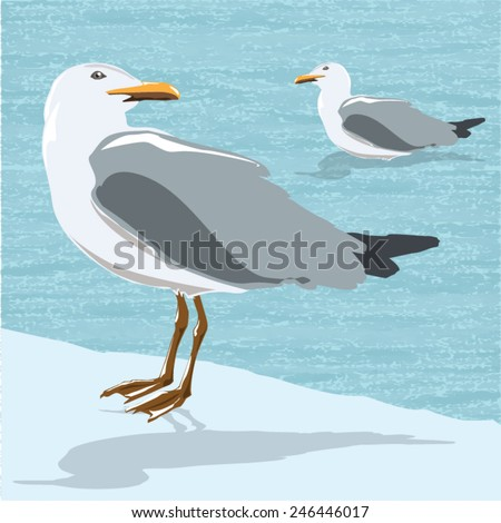 Vector seagulls isolated on background. Illustration - stock vector