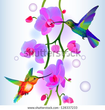 Vector seamless background with two rainbow hummingbirds flitting around gentle branch of beautiful pink orchids - stock vector