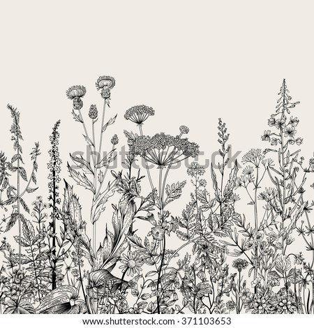 Vector seamless floral border. Herbs and wild flowers. Botanical Illustration engraving style. Black and white - stock vector