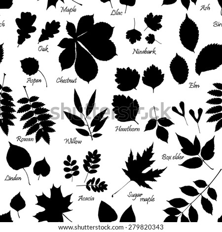 Vector seamless pattern of leaves silhouettes with names of trees and bushes on white background. Linden, ash, oak,maple, box elder, hawthorn, chestnut, birch, elm, willow, aspen, acacia, rowan, lilac - stock vector