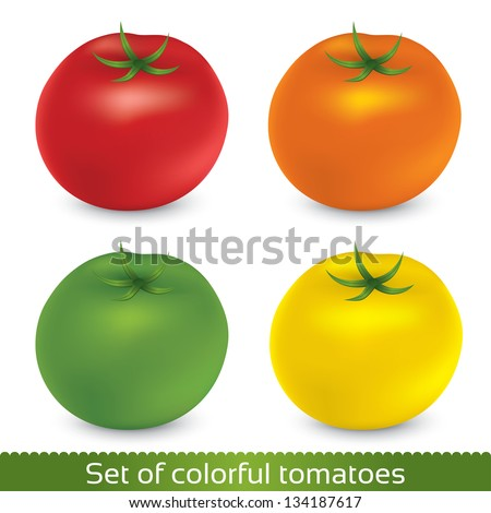 Vector set illustration of tomatoes isolated on white background. Graphic design set of tomatoes. - stock vector