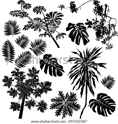 Vector set of black silhouettes of tropical leaves, palms, trees, foliage. Design elements of tropical nature. Stylized images and simple shapes for logos and natural decor - stock vector