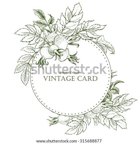 Vector set of calligraphic design elements, vintage botanical dog-rose flower card, Vintage Floral Greeting Card , Vector Illustration,round retro frame - stock vector