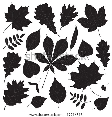 Vector set of different isolated tree leaf silhouettes on white background. - stock vector