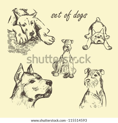Vector Set of dogs hand drawn - stock vector