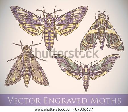 vector set of engraved moths - stock vector