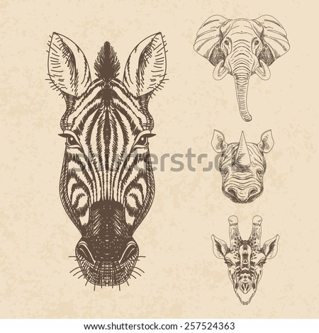 Vector set of hand drawn animal. Vintage illustration with elephant, giraffe, rhino and zebra. - stock vector