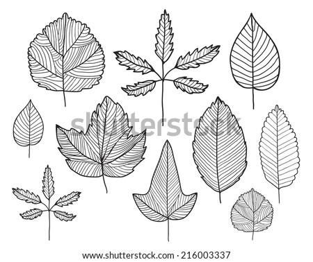 vector set of hand drawn doodle line leaves, herbarium, plants, autumn, spring - stock vector