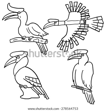 Indian Hornbill Drawing Vector Set of Hornbill