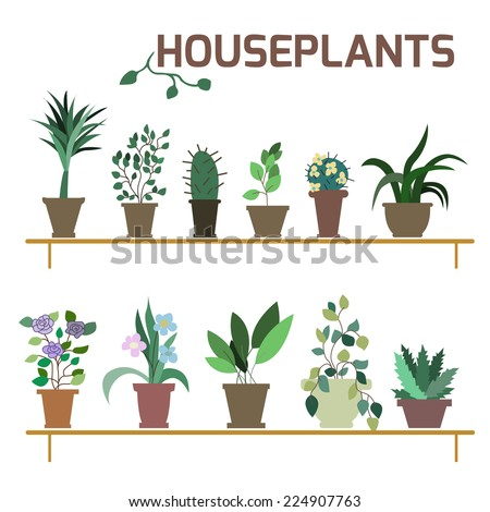 Vector Set of indoor plants in pots. Illustration - stock vector