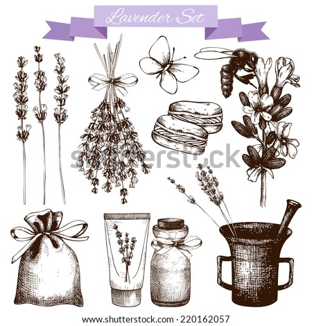 Vector set of ink hand drawn lavender illustration in lilac color. Vintage collection of lavender flowers sketch isolated on white - stock vector