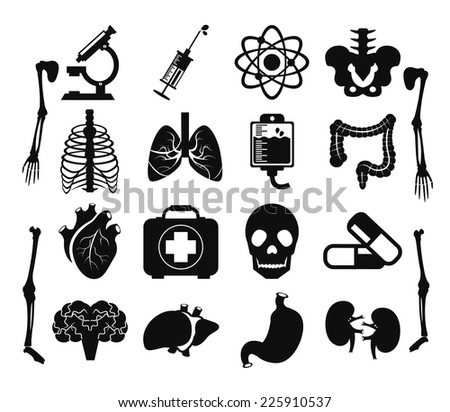 Vector set of internal human organs icons. Creative illustration, anatomy parts infograhics symbols.Bones, brain, heart, lungs, viscera, pelvis, ribs, sacrum, scapula etc.Isolated on white background - stock vector