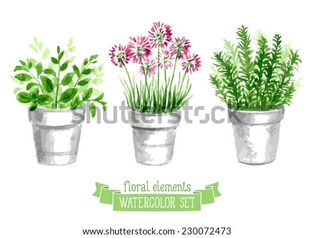 Vector set of provence herbs. Floral watercolor illustration - stock vector