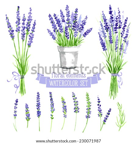 Vector set of provence herbs: lavender. Floral watercolor illustration - stock vector
