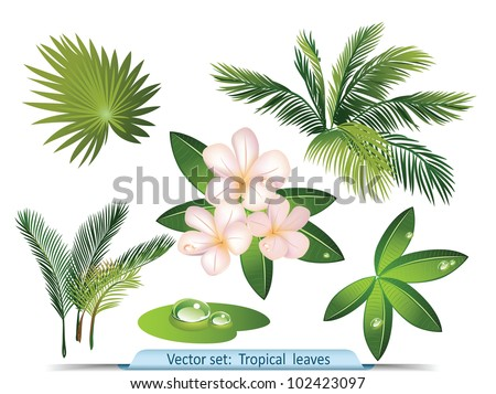 Tropical Plant Leaves Vector Set of Tropical Leaves