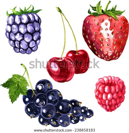 vector set of watercolor drawing berries, hand drawn vector illustration - stock vector