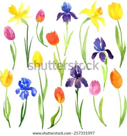 vector set of watercolor garden flowers, hand drawn vector design elements - stock vector