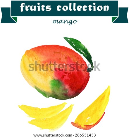 Vector set of watercolor mango elements on white background. Cute illustration is good for magazine or book, poster and card design, menu cover. - stock vector