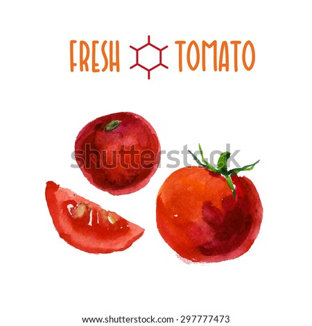 Vector set of watercolor tomato elements on white background. Cute illustration is good for magazine or book, poster and card design, menu cover. - stock vector