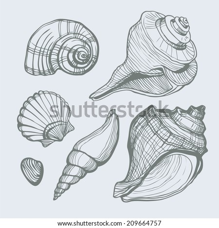 Vector set with hand drawn sea shell isolated. Vector illustration.  - stock vector