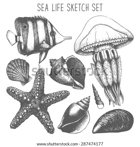 Cat together with Index together with Color Ocean Friends besides Under The Sea Wall Stencils additionally Coral Coloring Pages. on deep water jellyfish